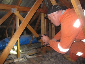 Pest and termite inspection Geelong