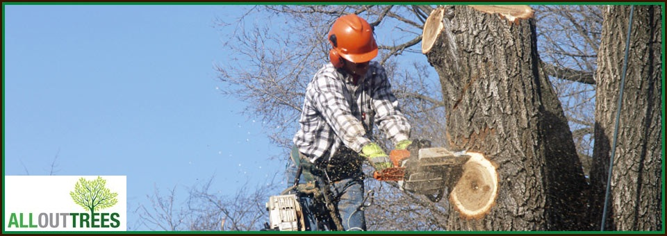 Things You Must Know Before Tree Removal Adelaide