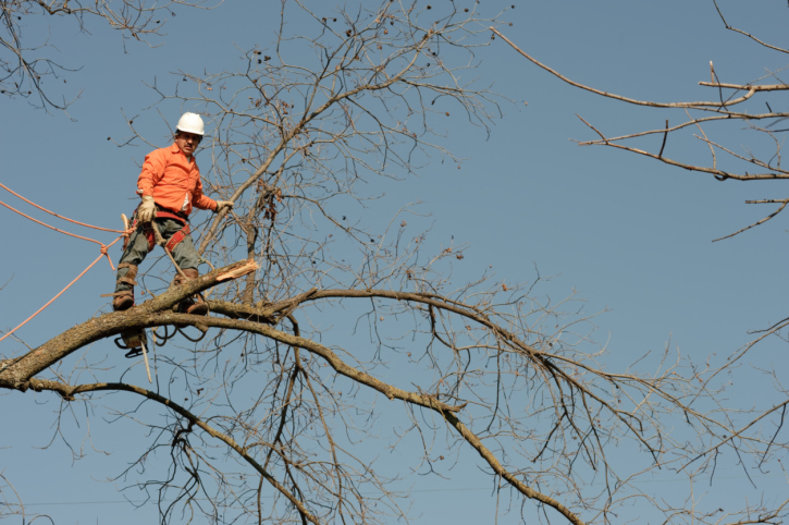 Factors to Consider While Doing Tree Removal Process