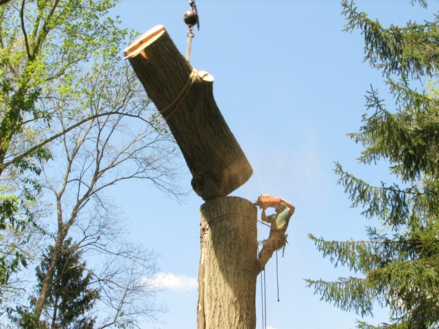 5 Tips that can be Useful Before Tree Removal Services in Melbourne