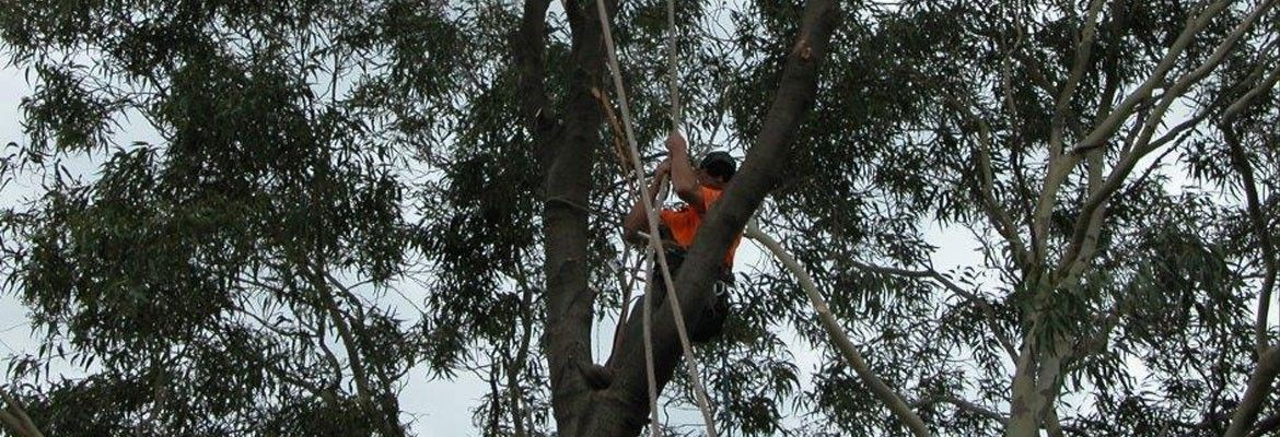 Give a New Look to Your Garden with the Professional Tree Removal Adelaide