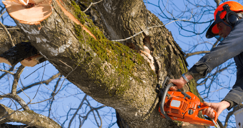Important Points to Enlist a Professional for Hazardous Tree Removal