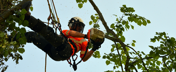 Importance of Hiring Tree Removal Melbourne Service Providers
