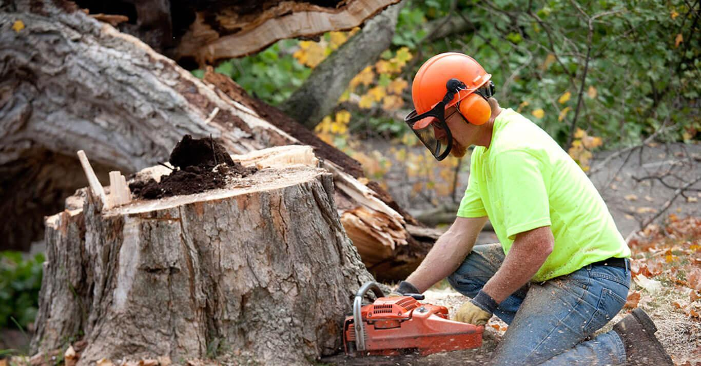 Types of Service You Can Expect From a Reputed Tree Removal Company