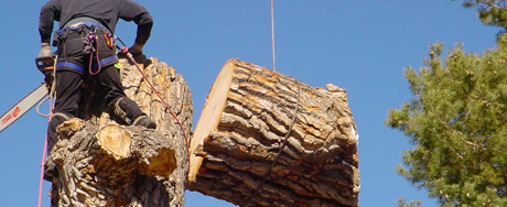 When To Call Stump Removal Experts In Your Melbourne Property?