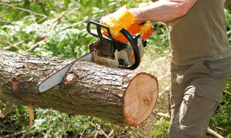 Stumps can be Unattractive – Hire Professional Tree removal Services