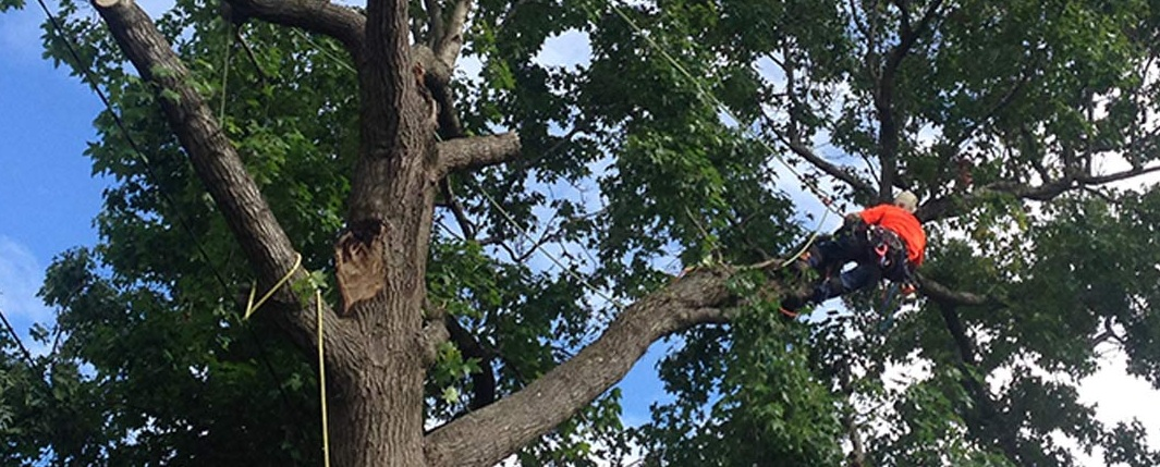 Why is it important to hire professional Tree Removal Croydon Companies?
