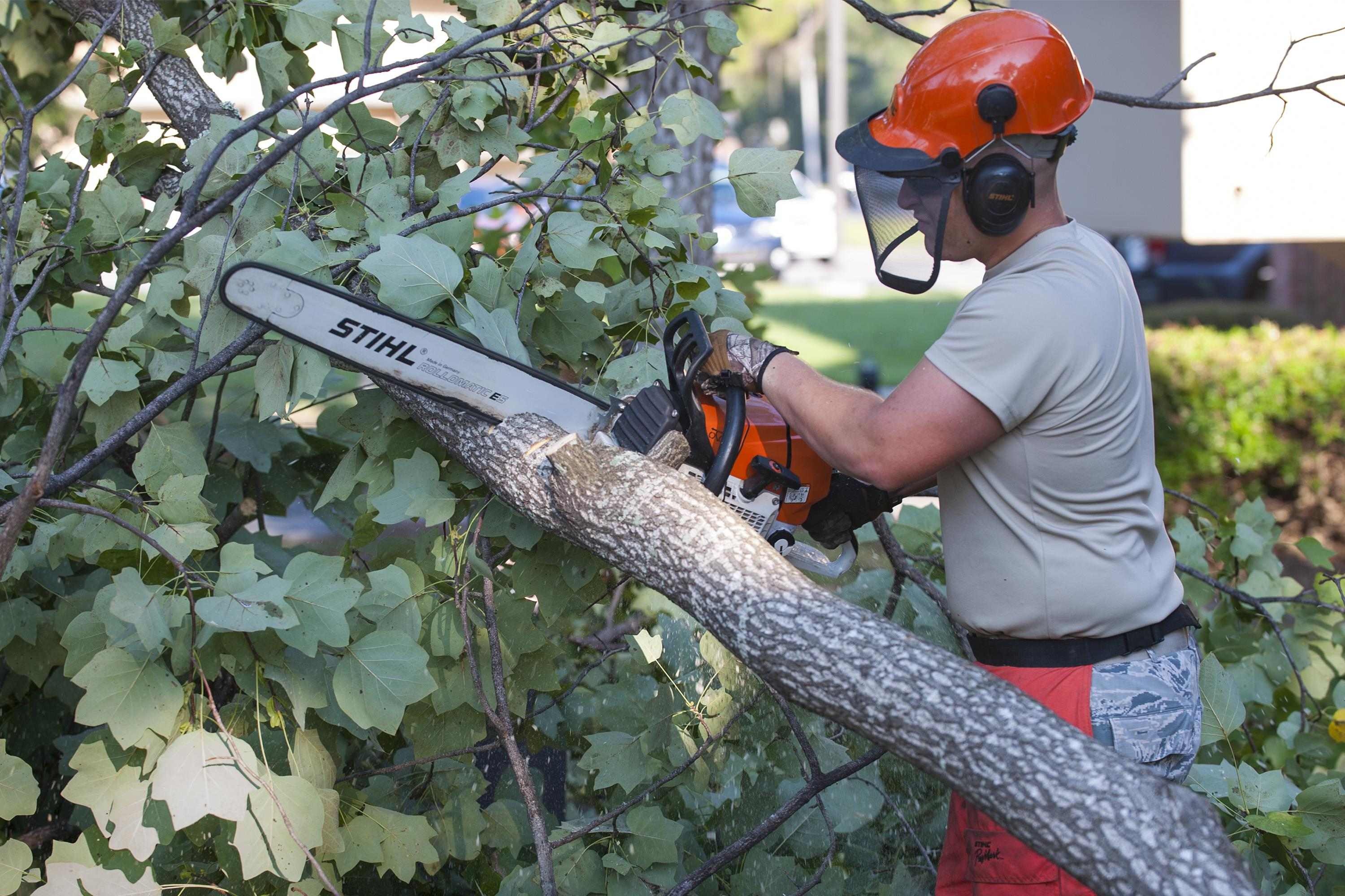 Tree Removal Ferntree Gully