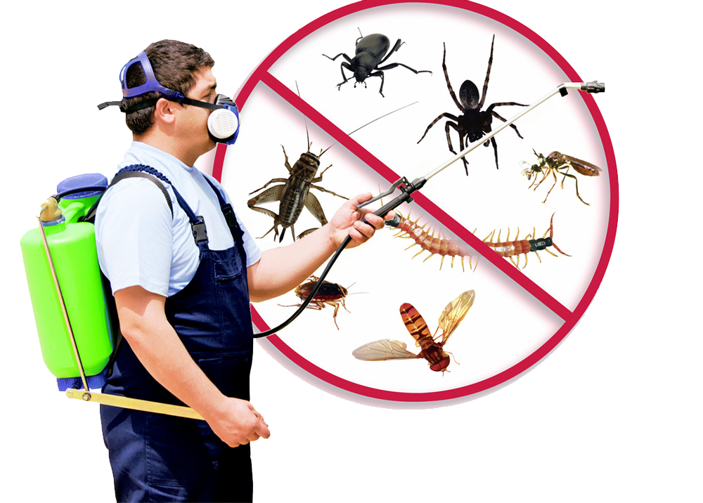 Why is it important to have pest inspection?