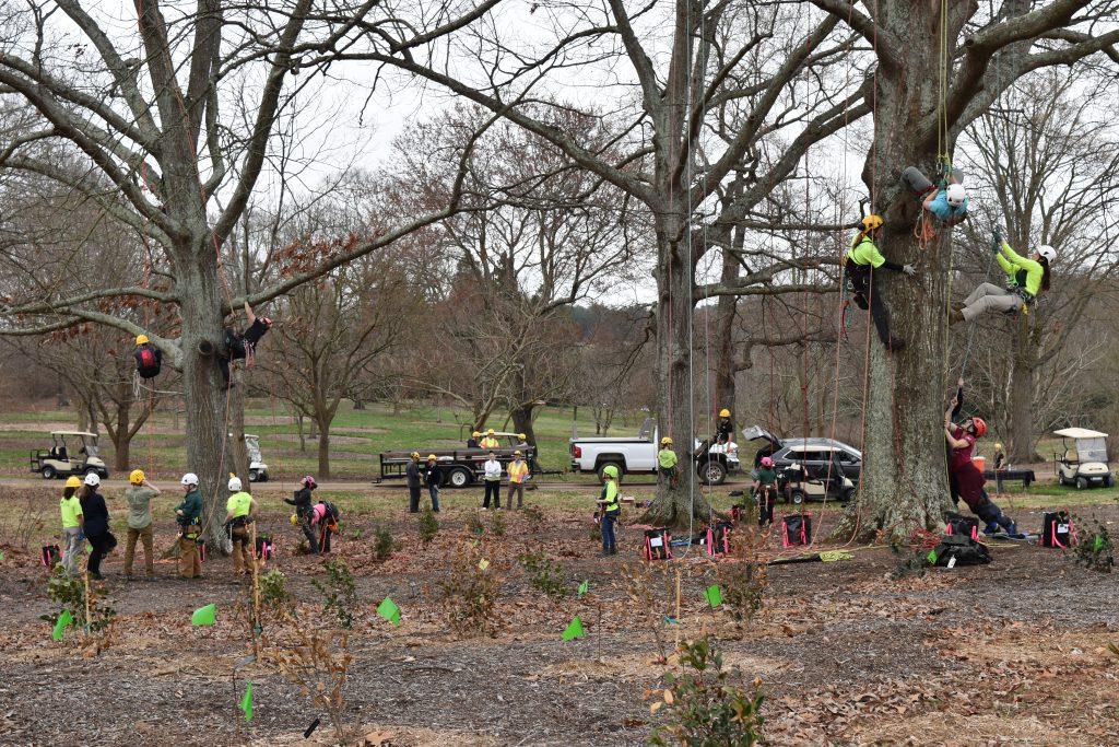 Importance of Stump Removals Melbourne