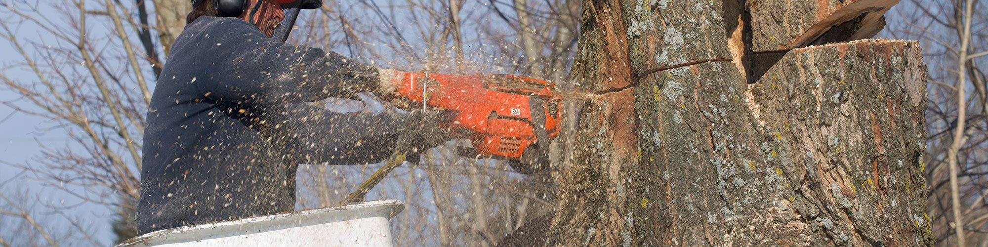 What things to take care of with tree pruning?
