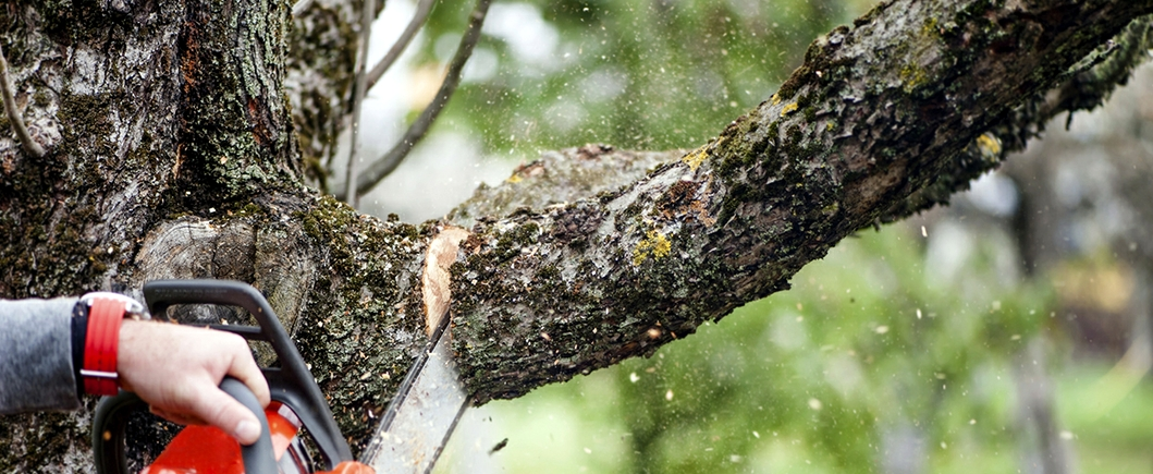 Process of Tree Trimming Melbourne