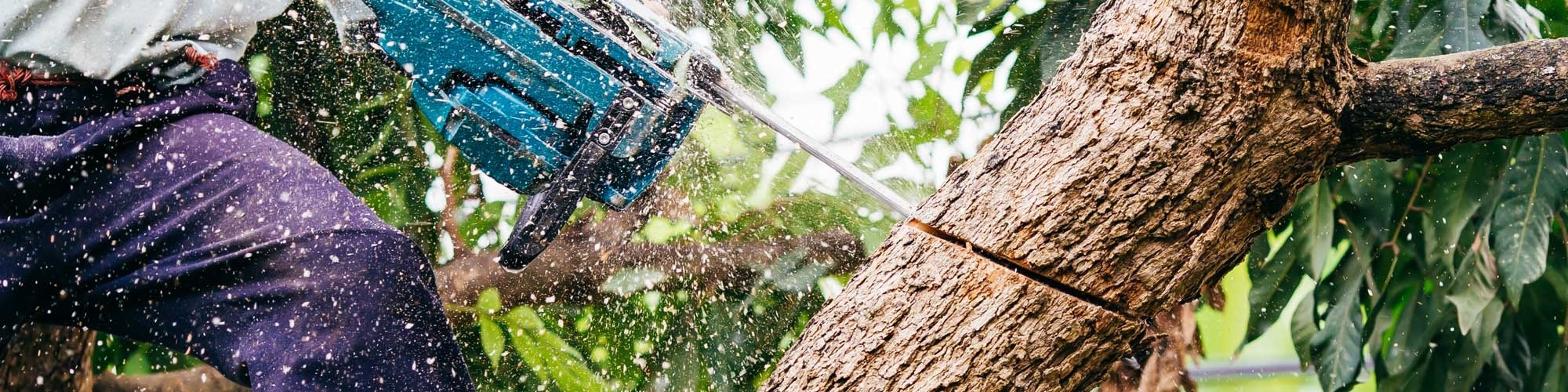 5 Things to consider while using the tree removal Adelaide service