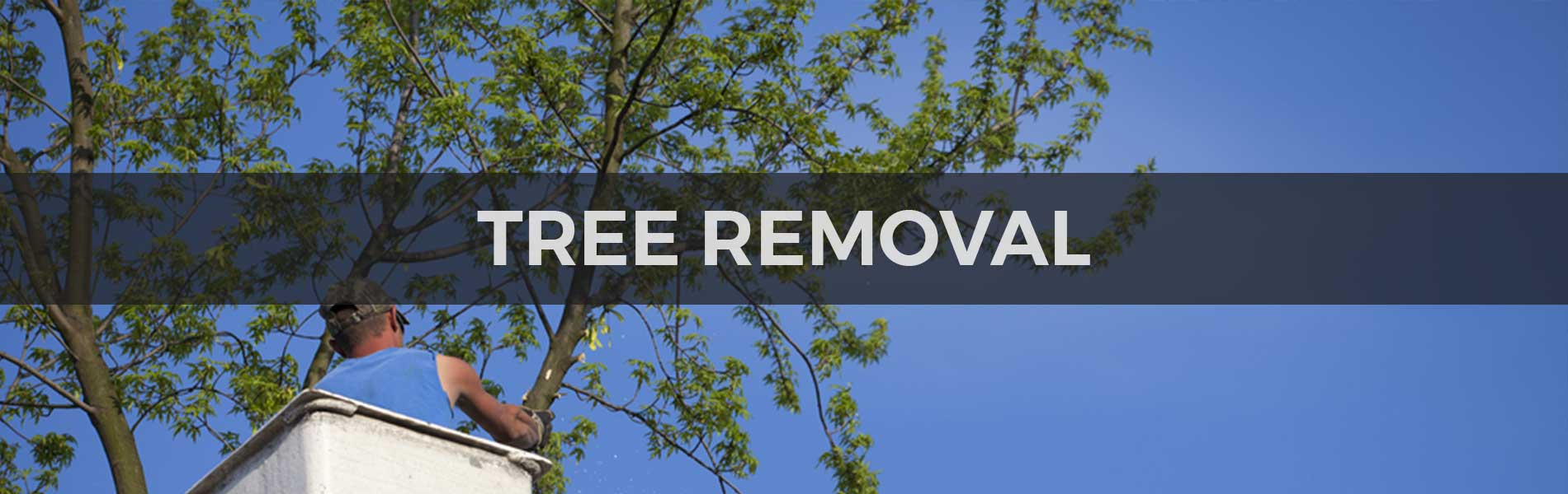 What are reasons for hiring professionals for Tree Stump Removal Service?