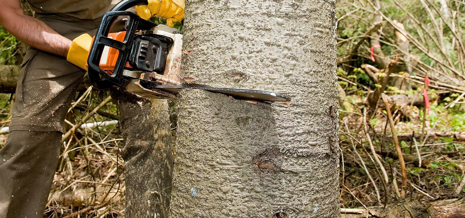 Why should you use the tree stump removal Adelaide service?