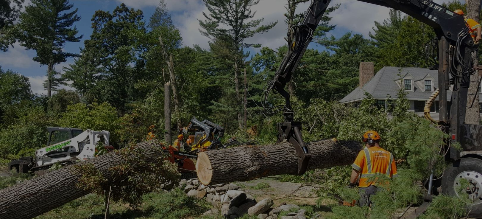 Few Factors To Consider While Choosing a tree removal Melbourne