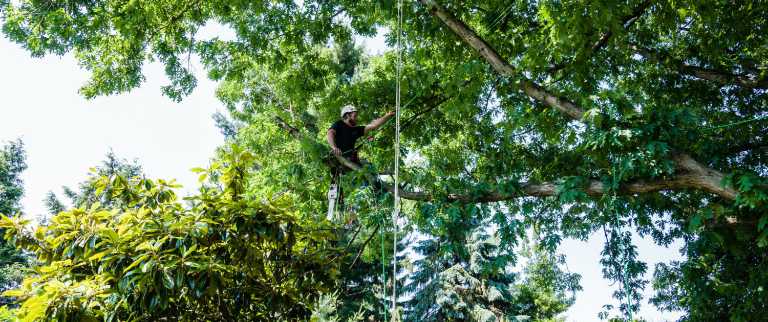Key reasons why you should use tree pruning Adelaide hills service?