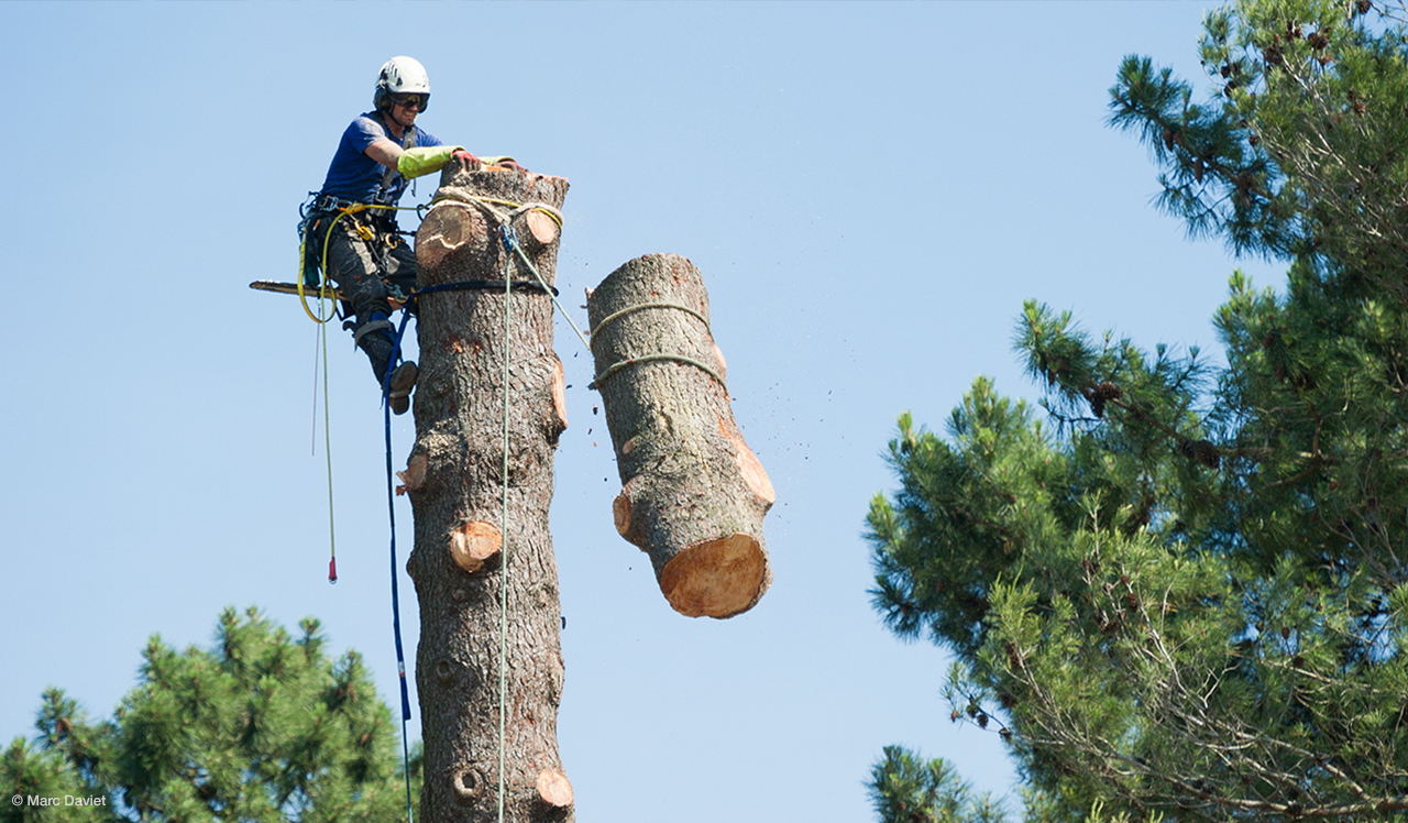 Protection service provided by tree removal experts Adelaide hills