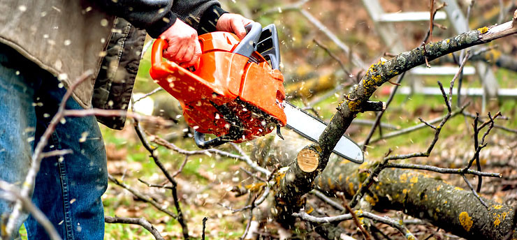 DO YOU NEED AN ARBORIST OR A TREE LOPPER?