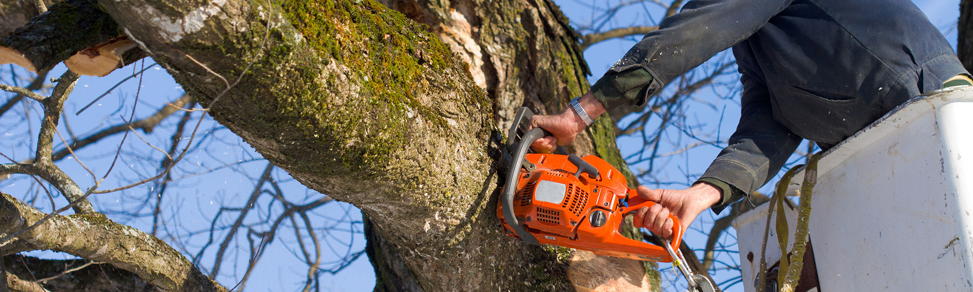 Some important things need to look before tree removal