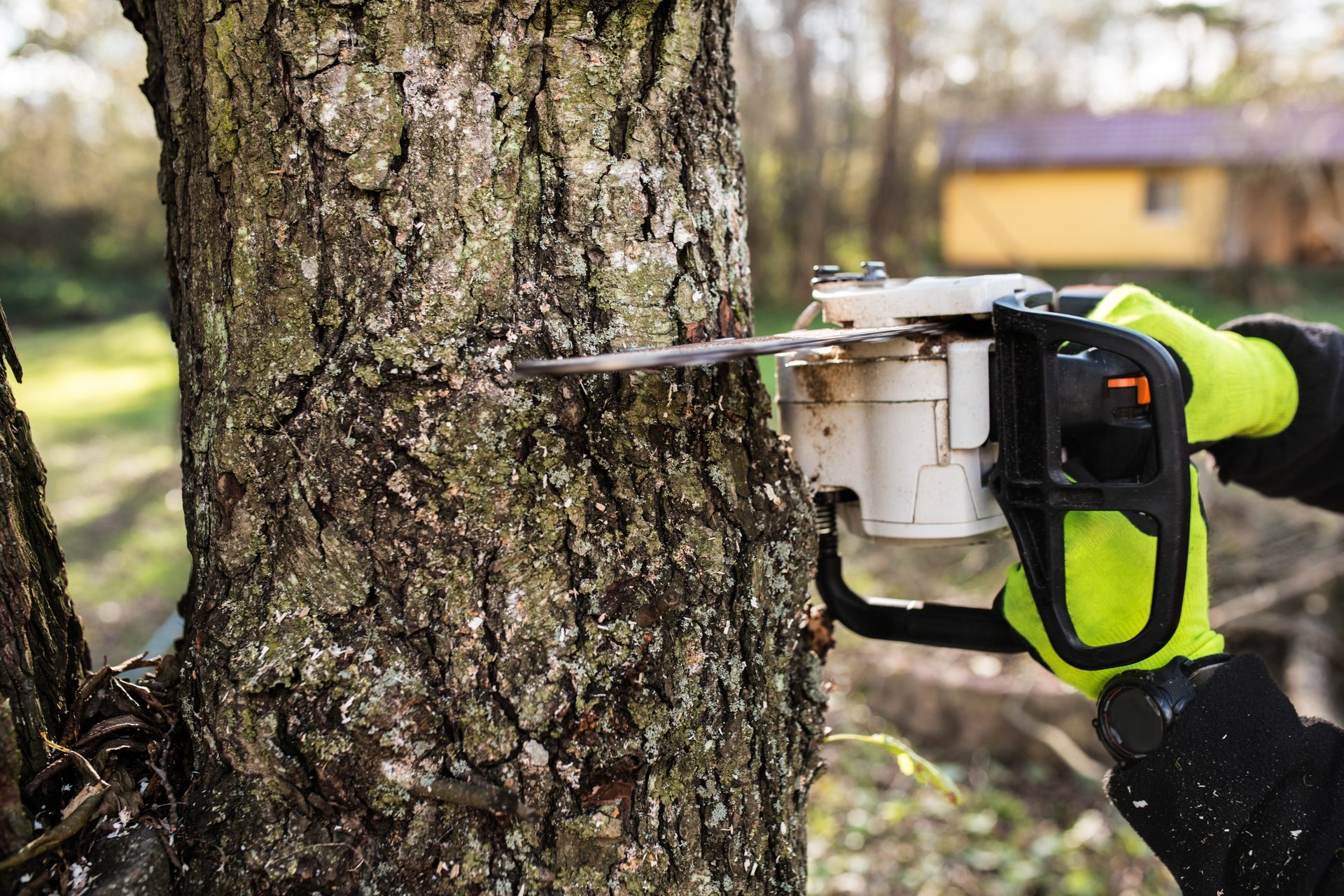 Protect the environment with perfect tree removal service provided in Melbourne