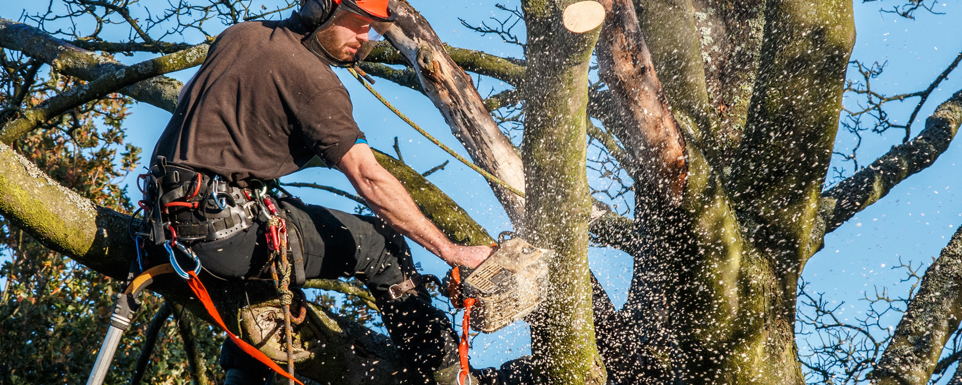 Why Should I Look For tree removal Adelaide Company?