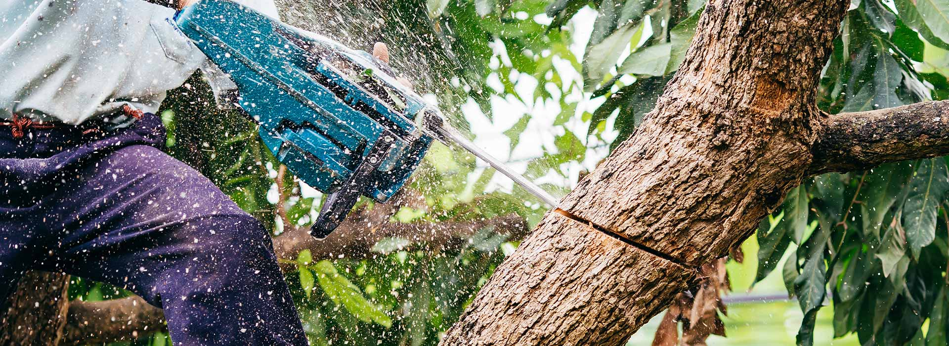 What Do You Need To Know About tree removal Adelaide Company?