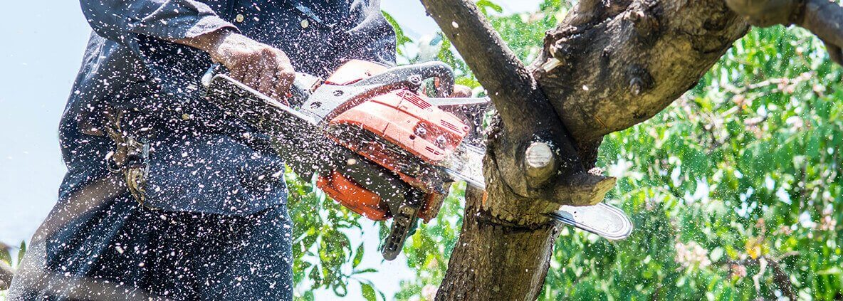 When Is the Right Time to seek tree removal Adelaide Services?