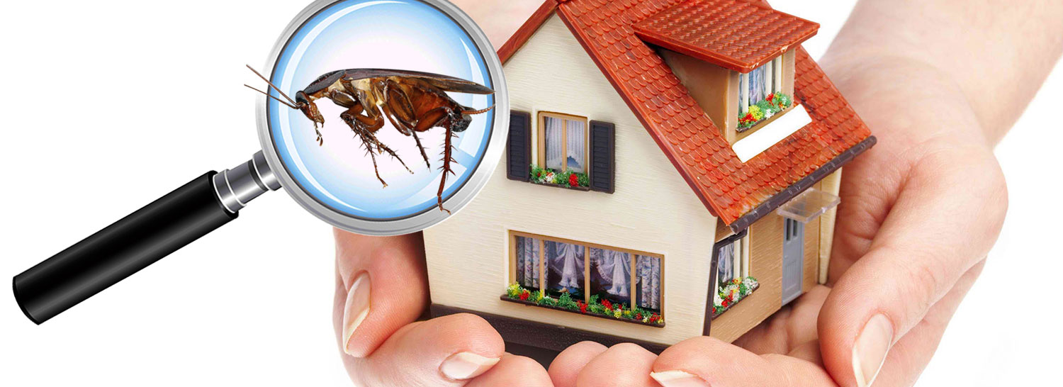 How To Get Rid Of Cockroaches In The House? Why Seek Pest Control Services?