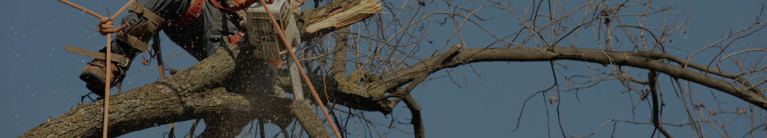 What should You Know About Tree Removal