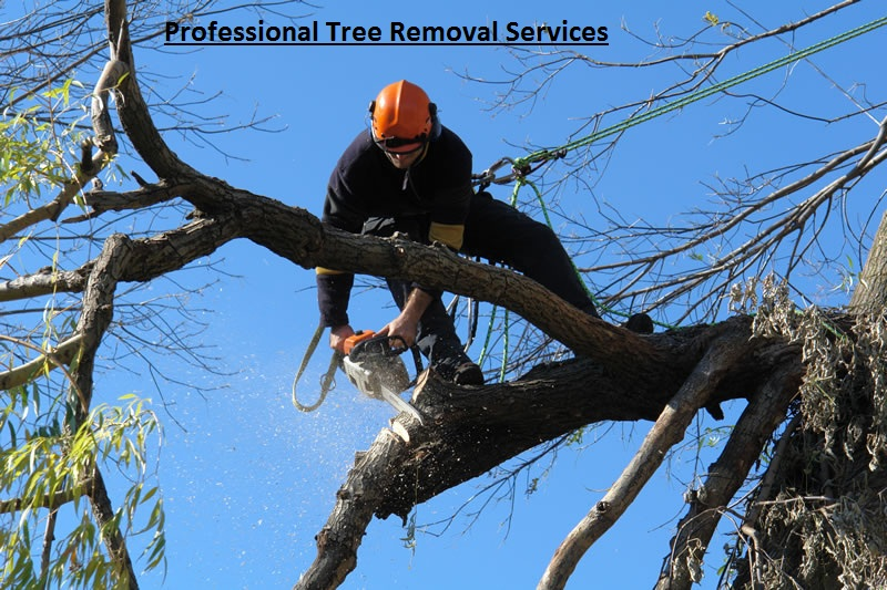 Why should I Seek for Professional Tree Removal Services