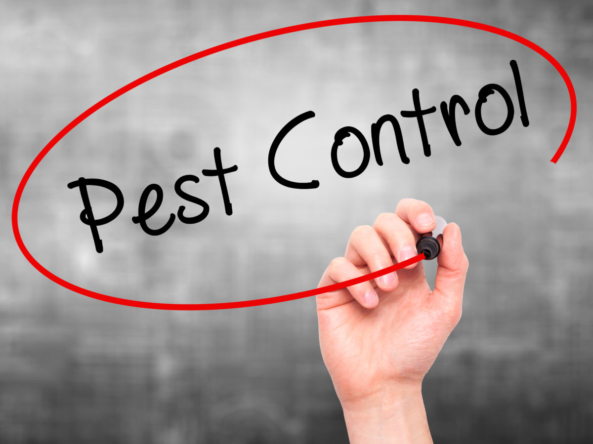 The importance of service for the right commercial pest control