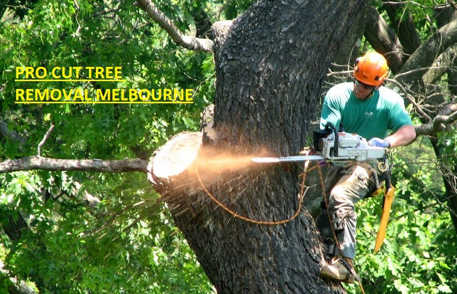 Boroondara Tree Removal