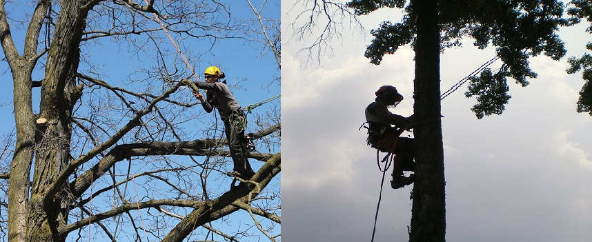 Hire Arborist in Melbourne