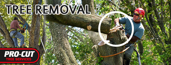 What Should You Ask the Tree Removal Specialist Before Taking A Service