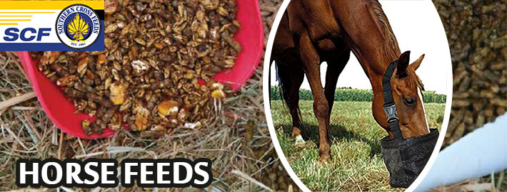 A Savvy Ways For Buying Food For Horse Nutrition For Strength & Power