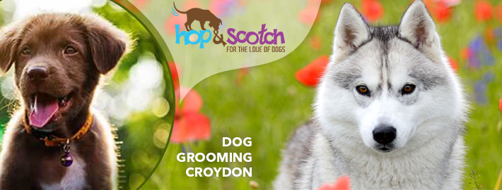 Amazing Benefits and methodical process of Dog Grooming!