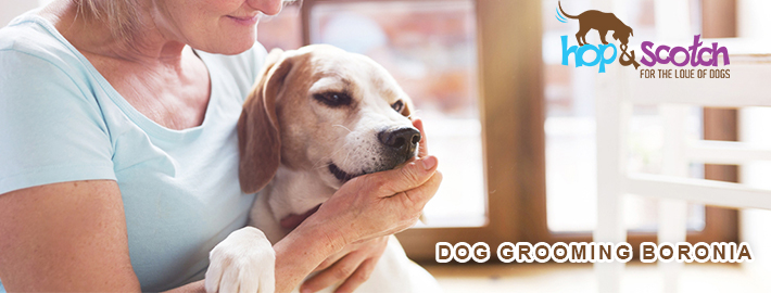 Why Dog Grooming is important assets for pet's health and fitness?