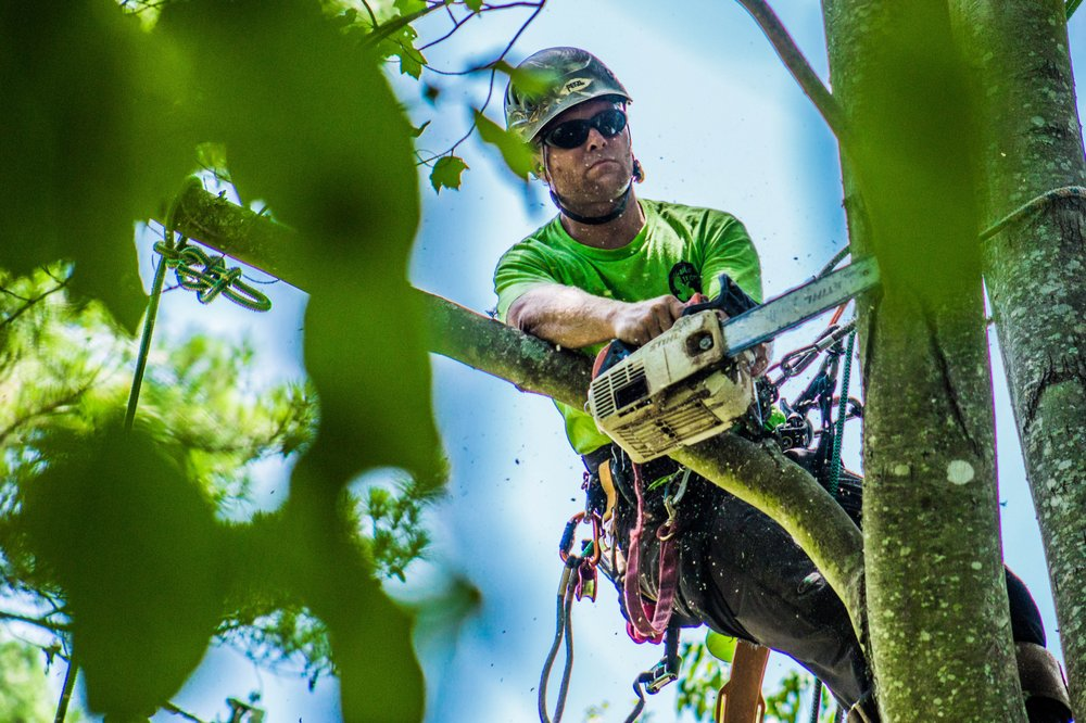 What Are The Potential Benefits Of Tree Removal Services?