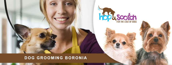 Keep Your Pet Neat and Clean with Professional Dog Grooming Services