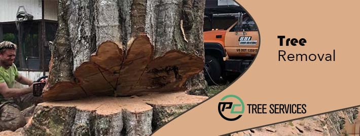 Step Wise Guide For Tree Removal Service For Your Home